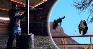 بالصور جنة الحمام   الحلقة 3   مكافحة الحشرات في سقيفة التخزين 0 109 310x165