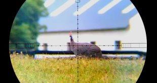 بالصور صيد طيور الغينيا في بقعة X 0 192 310x165