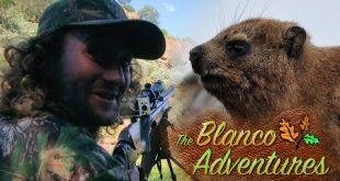 بالصور صيد الوبر على المدى البعيد , مغامرات بلانكو الحلقة 1 0 331 310x165