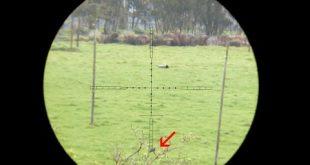 بالصور اطلاق النار على يمامة على بعد 156 ياردة 0 332 310x165