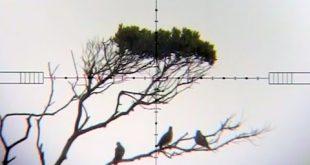 بالصور اطلاق النار على يمامة على بعد 114 ياردة 0 337 310x165