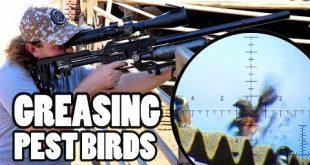 بالصور التشحيم لصيد الطيور الغزاة مع تريو من اف اكس امباكت وبنادق هوائية لمكافحة الافات 0 55 310x165