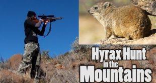 صيد Hyrax في الجبال - التجربة تستحق تسلق الجبال