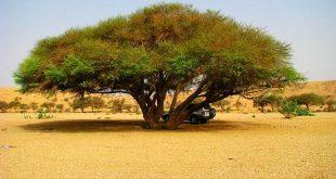 موسوعة النباتات البرية والاشجار