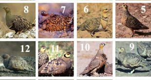 اسماء الطيور لاغلب المناطق ومسمياتها المختلفة لدى البعض